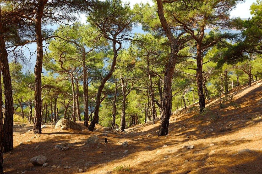 Mediterranean Forests, Woodlands, and Scrub