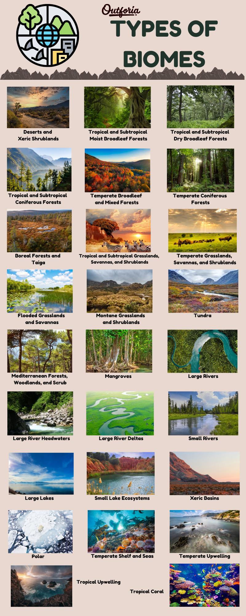 Chart and infographic of all the different biome types
