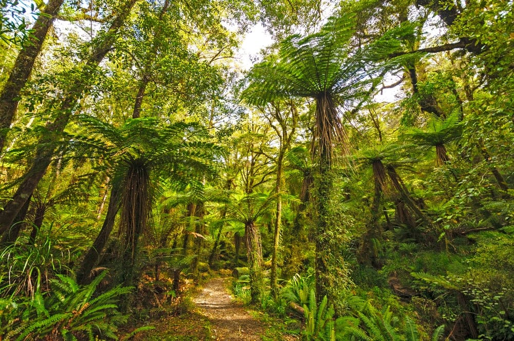 Rainforest Biome Image